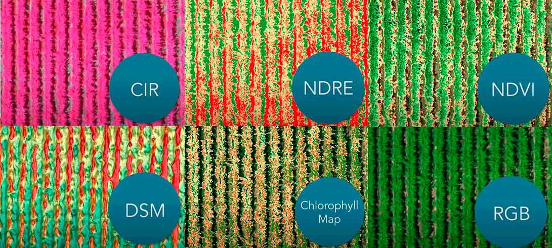rededge mx maps